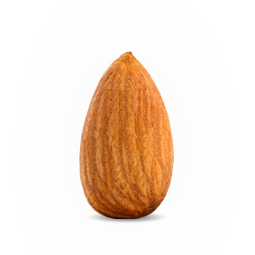Sead of almond